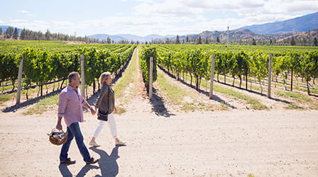 Man and woman holding hands walking through vineyard